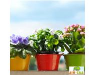 Уход за комнатными и балконными растениями