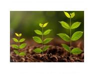 Стимуляторы роста растений. Укоренители