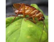 Защита от тараканов