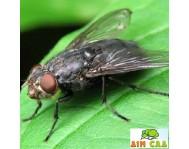 Защита от мух