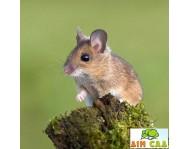 Защита от мышей и крыс