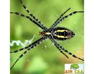 Защита от пауков