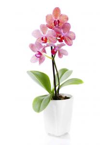 Agrecol Средство ухода за орхидеями 200ml