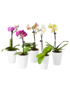 Substral Удобрение в палочках  для Орхидей 5шт