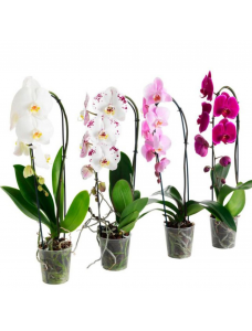 Zielony Dom Удобрение в палочках для орхидей с GUANO